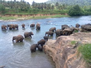 Pinnevalla Elephants