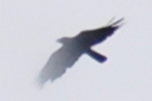 Bird over Colombo Sri Lanka saying cya...