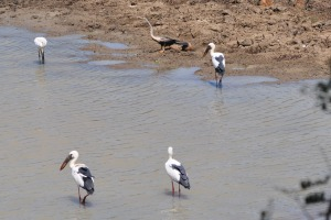Birds at Yala